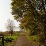 Weg an der Buchhorst