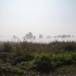 Rand der Buchhorst